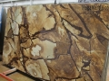 Stone Wood Quartzite Slab